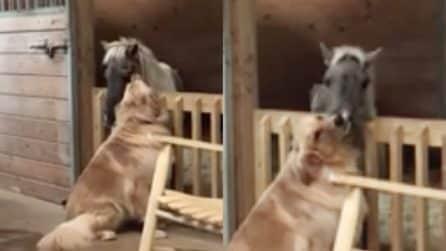 Il pony è in fin di vita, il cane si avvicina per confortarlo: le immagini sono tenerissime