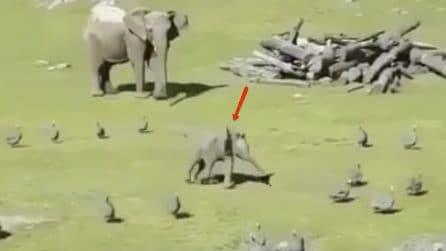 Dumbo esiste ma non usa bene le sue orecchie, quello che fa è esilarante