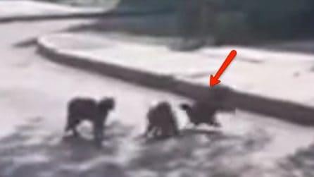I due gatti litigano in strada: la reazione del corvo è da non credere