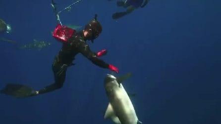 Sette ami rimasti conficcati negli squali: il sub si immerge per salvarli