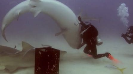 Sembra che lo squalo la attacchi: la donna invece lo sta ipnotizzando