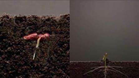 Pianta un seme e riprende cosa succede: il timelapse è spettacolare