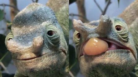 Il camaleonte avvista la sua preda, poi l'attacco: la natura vista da vicino