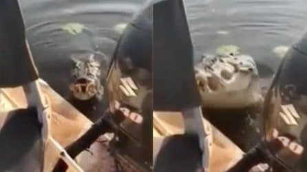 Paura durante la gita in barca: l'alligatore esce dall'acqua e prova a salire a bordo