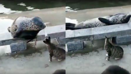 Il gatto si avvicina e la colpisce: la reazione della foca è esilarante