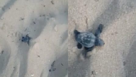 Sicilia, sorpresa tra i bagnanti: dal nido escono piccoli di tartaruga
