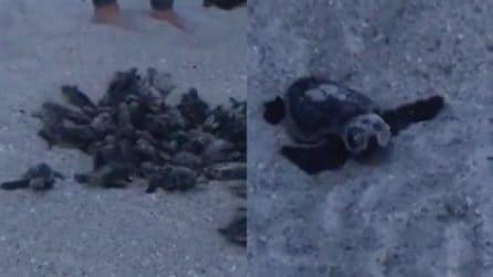 Escono improvvisamente dalla sabbia: le immagini sono spettacolari