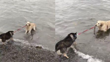 Il cane odia l'acqua, ma l'amico lo costringe e lo tira per il guinzaglio: le immagini esilaranti