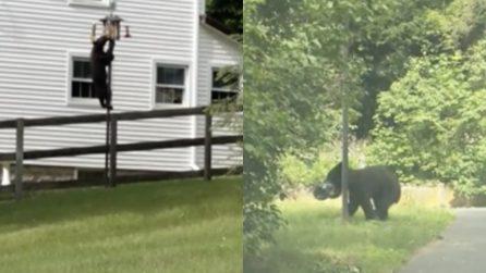 L'orso si arrampica: quello che fa lascia i passanti senza parole