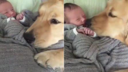 Incontra per la prima volta la figlia dei suoi padroni: la reazione del cane è dolcissima