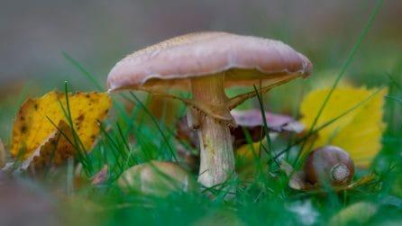 Le 11 regole per mangiare funghi in sicurezza evitando intossicazioni e avvelenamenti