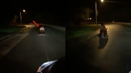 Strani incontri in strada: quando lo vede non crede ai suoi occhi