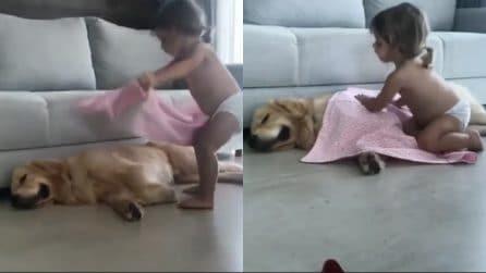 Il cane sta dormendo, la piccola è preoccupata per l'amico a 4 zampe: il gesto tenerissimo
