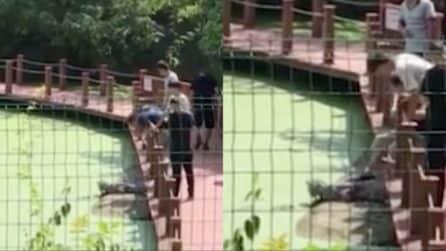 Dà un calcio al coccodrillo, i testimoni rimangono scioccati: il comportamento ignobile