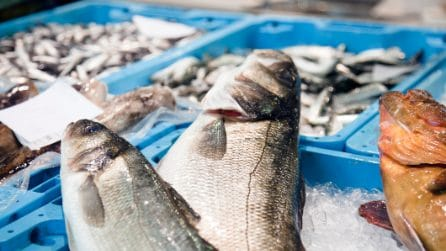 Come riconoscere se il pesce è fresco: 4 regole per capirlo facilmente