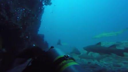 Immersione con gli squali: l'emozionante esperienza dei sub