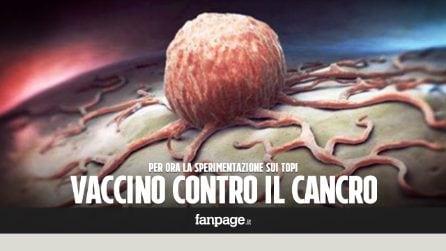 Vaccino contro il cancro, efficace nel 100% dei casi sui topi malati di tumore