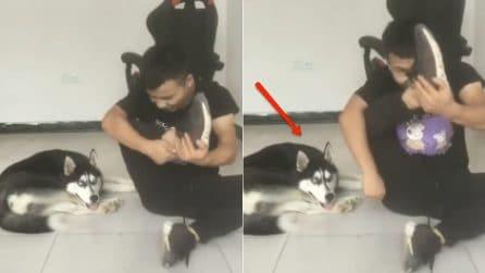 Il padrone si filma mentre si allena: ciò che fa l'husky alle sue spalle è esilarante