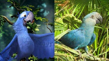 Addio al pappagallo blu protagonista del film di animazione Rio. L'Ara Spix si è estinto in natura