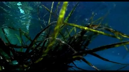 The Tree Of Life, una scena del film