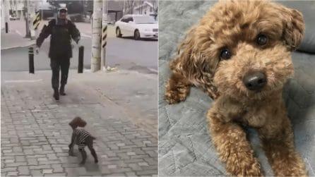 Dopo mesi di lontananza il suo padrone torna a casa: la dolcissima reazione del cane