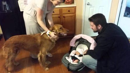 Il cane incontra per la prima volta la figlia dei padroni: amore a prima vista