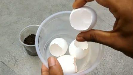 Fertilizzante naturale per piante: ecco come prepararlo con i gusci delle uova