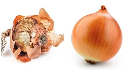 Come conservare le cipolla con un metodo semplicissimo