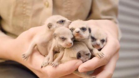Sorpresa allo zoo: assistono alla nascita di una specie unica