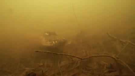 Paura nei fondali, si immerge ma l'acqua è torbida: l'incontro spaventoso
