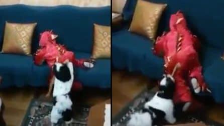 Il bimbo cerca di salire sul divano, ma il suo amico a 4 zampe glielo impedisce: la scena esilarante