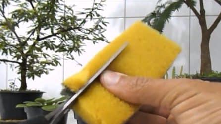 Come riutilizzare le spugne da cucina vecchie: un riciclo utile per le piante