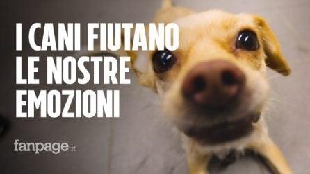 I cani sentono l'odore delle emozioni: come reagiscono a felicità e paura