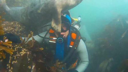 Si immerge e si imbatte in una foca: il faccia a faccia è inaspettato
