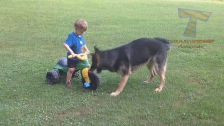 Bambino gioca col triciclo: improvvisamente arriva il cane che inizia a morderlo