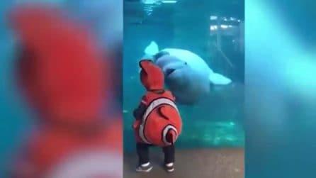 """Va all'acquario vestito da Nemo provocando una """"strana"""" reazione del beluga"""
