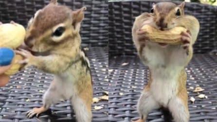 """Offre le noccioline allo scoiattolo: la sua """"voracità"""" vi farà morire dal ridere"""