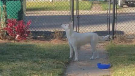 Il tenero incontro tra un cane cieco e sordo con il suo padrone