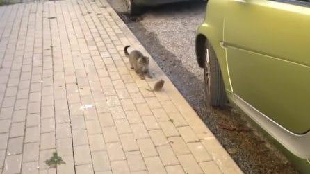 Il gatto si avvicina per attaccare il topo, ma qualcosa va storto e la scena si ribalta