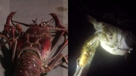 La cattura e il rilascio della gigantesca aragosta alle Bermuda: le impressionanti immagini
