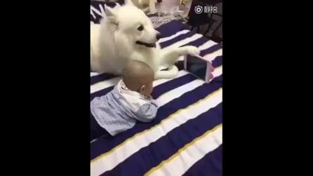 """Adorabili momenti con il cane: il piccolo guarda i cartoni insieme al suo """"amico"""""""