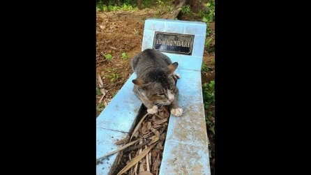 Il dolce gatto che dorme sulla tomba del padrone defunto