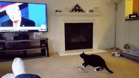C'è Trump in tv: la reazione del gatto è esilarante