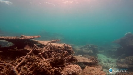Ecco come sta morendo la Grande Barriera Corallina
