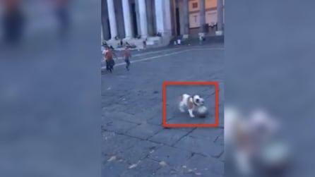 Tra i bambini, un calciatore di talento: un cane prodigio nel cuore di Napoli