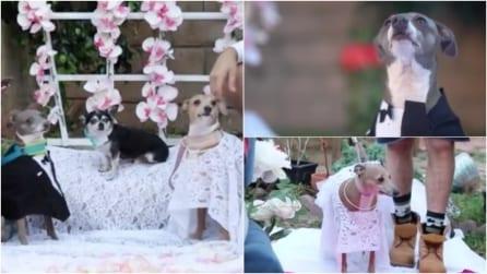 Vestiti, anelli e invitati: una ragazza celebra il matrimonio dei suoi due cani