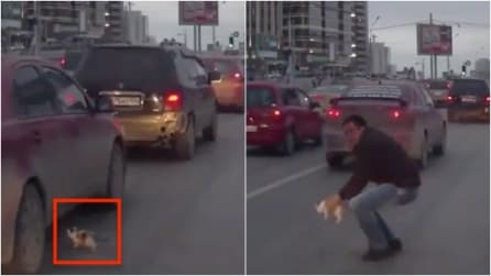 Il gattino sta per essere schiacciato: un buon samaritano si getta tra le auto e lo salva