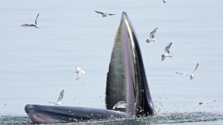 Thailandia il Whale watching nella baia di Bangkok