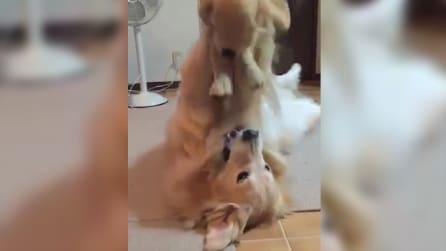 Il cane gioca con il suo peluche preferito: una scena dolcissima
