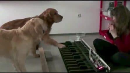 I due cani al pianoforte: suonano meglio di molti umani